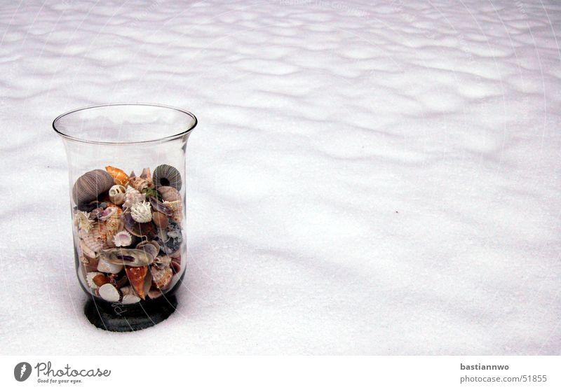 snow shells Cold Mussel Winter Sea urchin Snow Glass