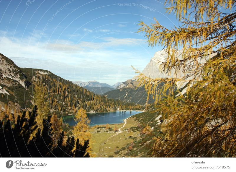 Seebensee Nature Landscape Horizon Autumn Tree Alps Mountain Zugspitze Lake Mountain lake Life Purity Uniqueness Idyll Environment Far-off places Colour photo