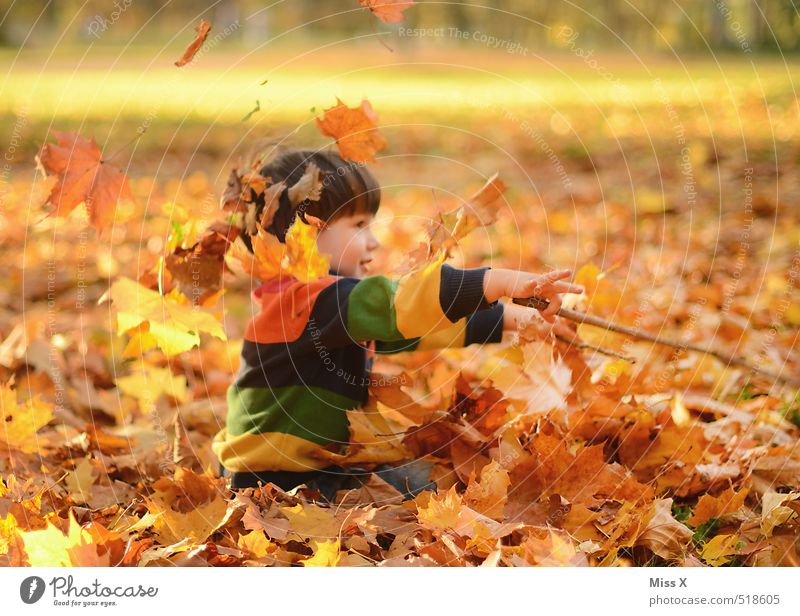 conductor Leisure and hobbies Playing Children's game Human being Masculine Toddler Infancy 1 1 - 3 years 3 - 8 years Nature Autumn Beautiful weather Leaf