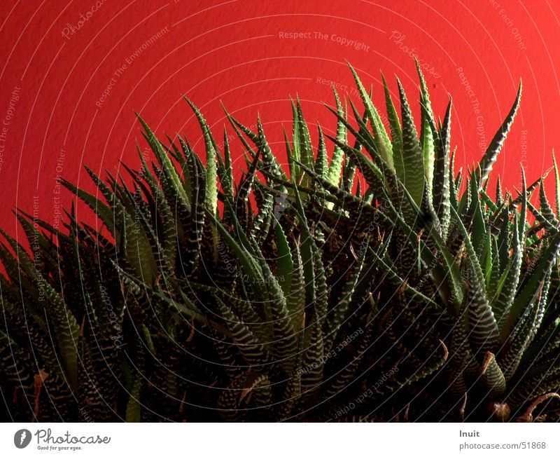 primeval forest Plant Wall (building) Red Growth Flower Thorn