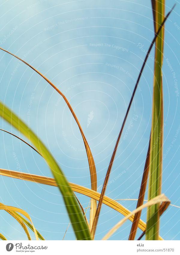 Sky Sun Green Blue Plant Clouds Grass Wind Blade of grass Blue sky Bad weather