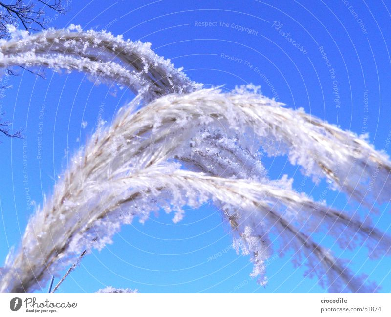 Sky Blue Plant Winter Cold Snow Ice Frost Stalk Beautiful weather Crystal structure Flake