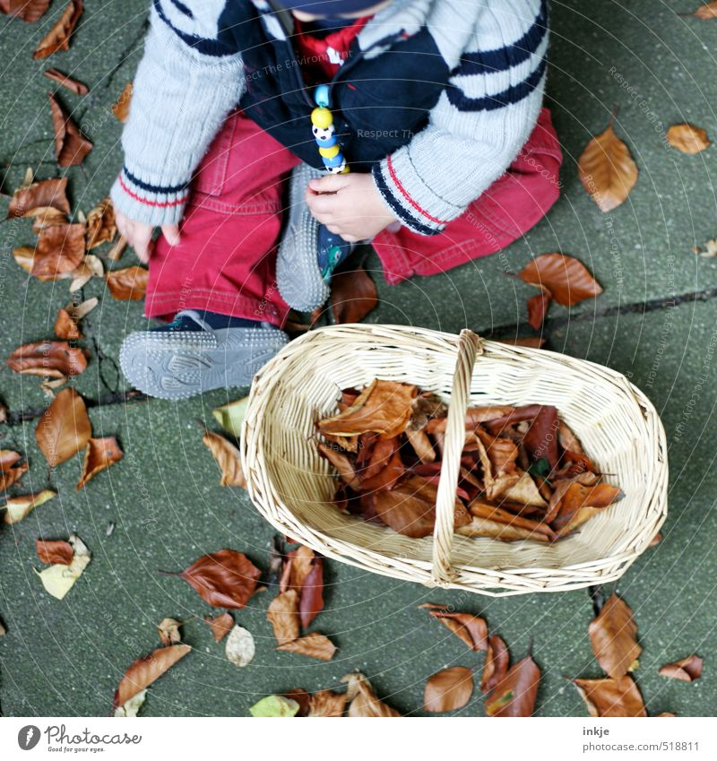autumn Leisure and hobbies Children's game Baby Infancy Life Body 1 Human being 0 - 12 months Nature Autumn Autumn leaves Leaf Garden Park Clothing Pants Jacket