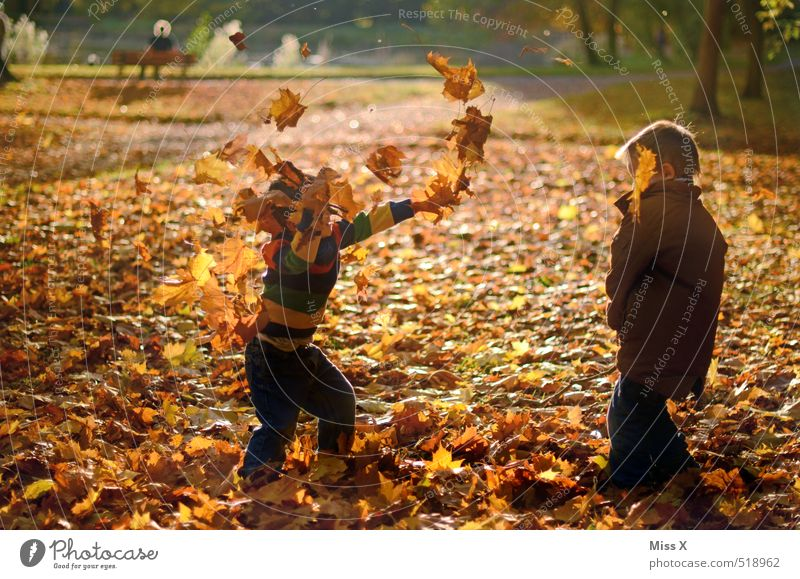 Human being Child Tree Joy Leaf Forest Emotions Autumn Playing Friendship Moody Park Leisure and hobbies Infancy Happiness Toddler