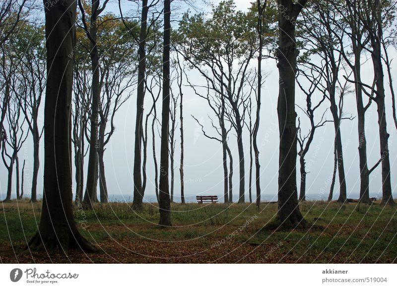 Ghost forest with bench Environment Nature Landscape Plant Sky Autumn Tree Forest Dark Bright Cold Natural Beech wood Park bench Colour photo Subdued colour