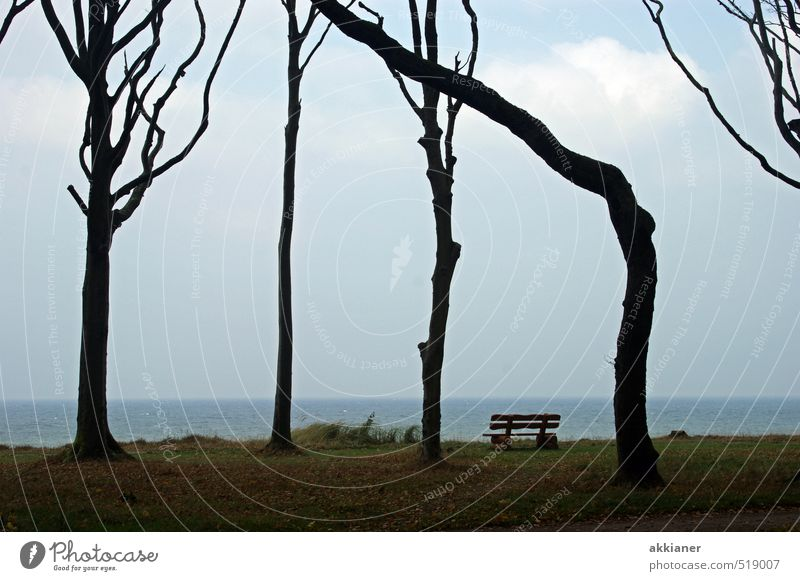 A little crooked Environment Nature Landscape Plant Sky Autumn Tree Forest Coast Baltic Sea Ocean Dark Bright Cold Natural Bench Colour photo Subdued colour