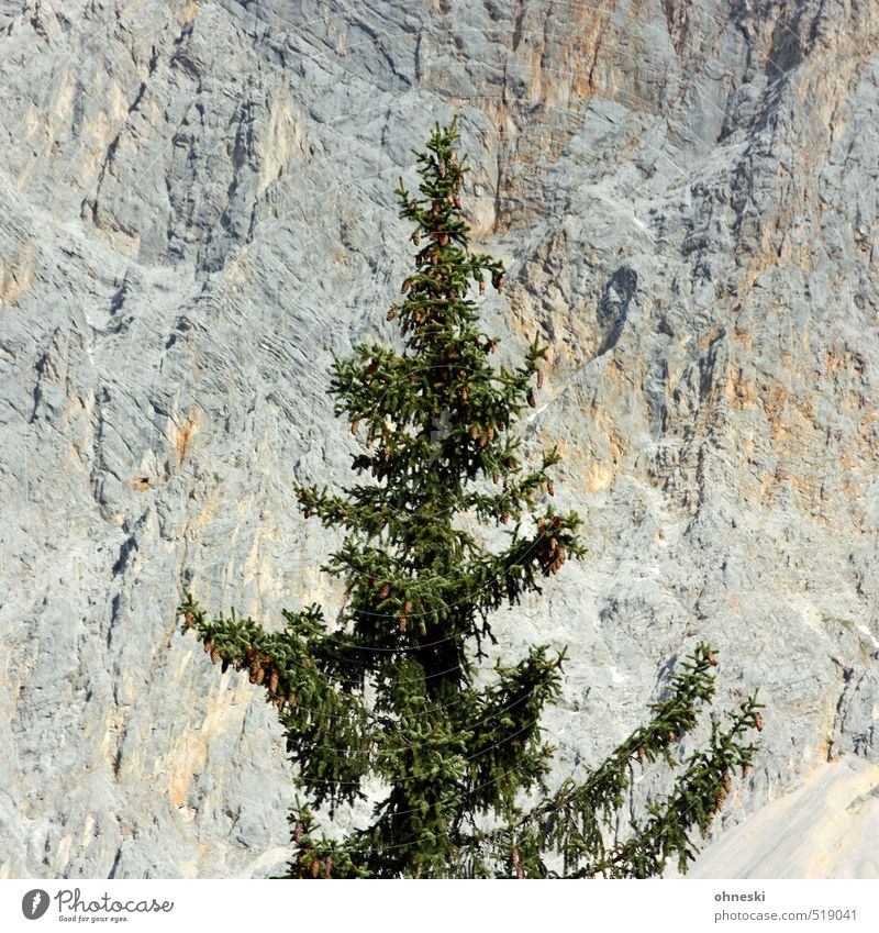 Tree Landscape Mountain Stone Rock Idyll Uniqueness Alps Christmas tree Fir tree Coniferous trees