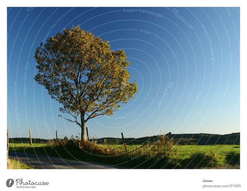 Nature Beautiful Sky Tree Sun Green Blue Plant Summer Warmth Landscape Horizon Physics Seasons Fence Pol-filter