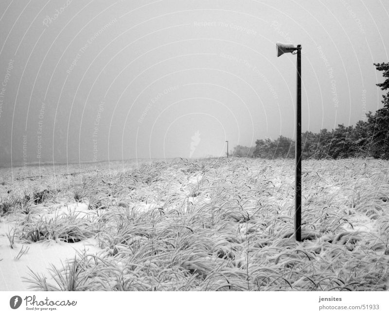 high season Winter Beach Loudspeaker Tree Grass Nature Germany Beach dune Snow Electricity pylon Baltic Sea