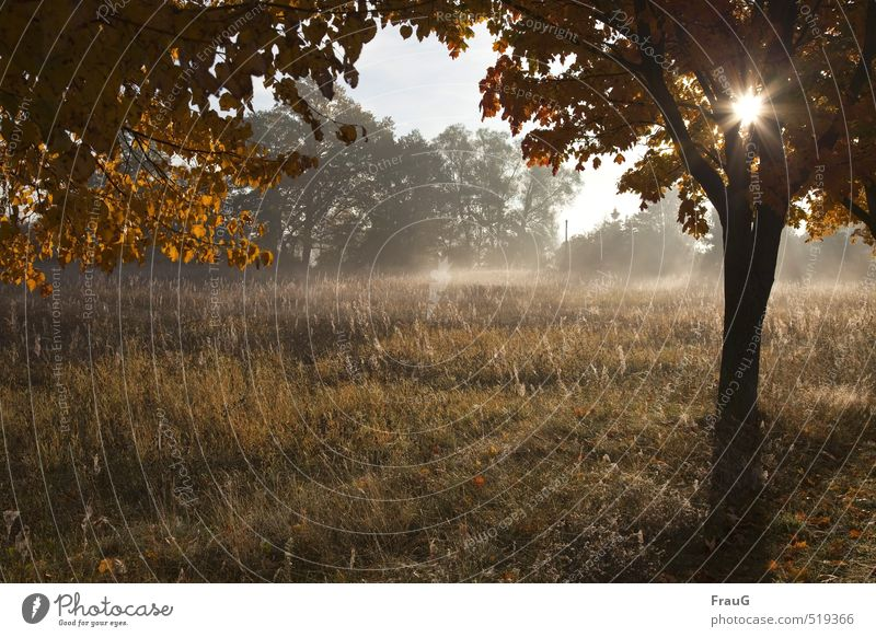 October morning Nature Landscape Sun Autumn Fog Tree Grass Meadow Deserted Brown Yellow Calm Morning Haze Autumnal colours Beautiful weather Colour photo