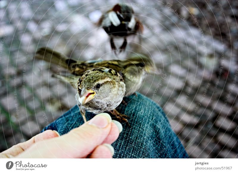 A sparrow on a leg... Sparrow Bird Human being Hand Feed Feeding Trust Smooth Caresses Be confident