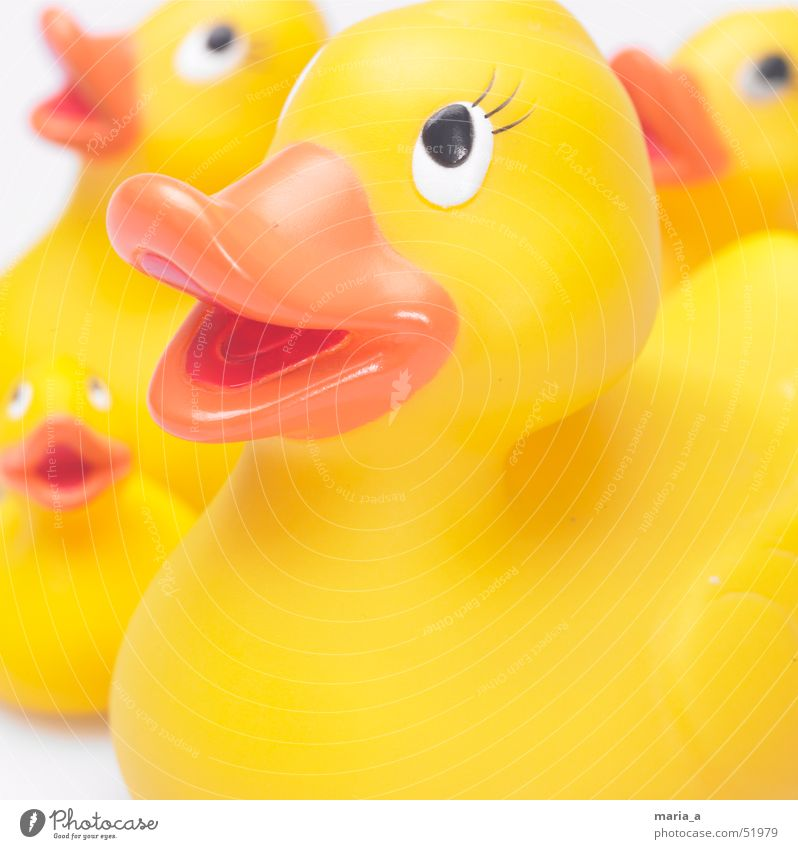 Eyes Happy Happiness 4 Toys Duck Beak Squeak duck Puppy love