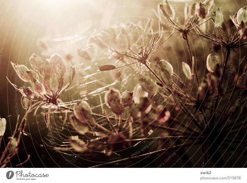 spun Environment Nature Plant Autumn Climate Weather Beautiful weather Warmth Bushes Wild plant Glittering Illuminate Faded To dry up Bright Near Natural Calm