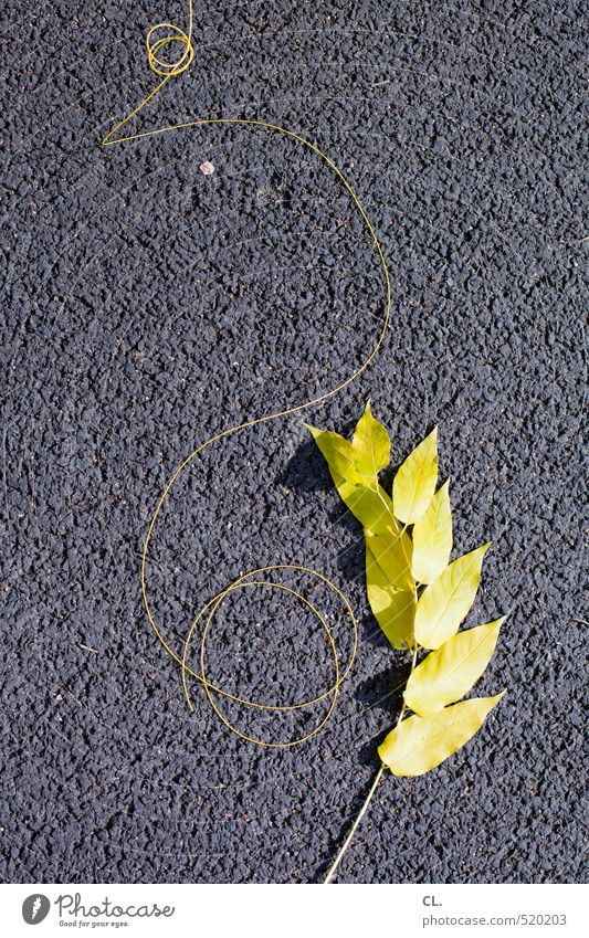 cord Nature Autumn Leaf Stone Yellow Gray Twig Cable String Pavement Street Asphalt Floor covering Colour photo Exterior shot Abstract Deserted Copy Space top