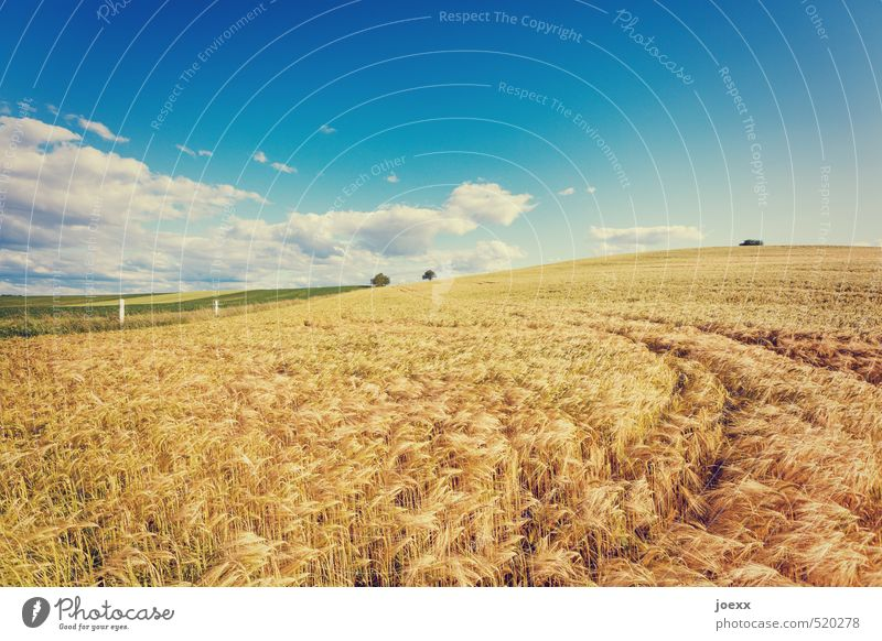 No bed Nature Landscape Sky Clouds Horizon Summer Beautiful weather Field Free Fresh Healthy Large Bright Dry Warmth Blue Brown Green White Cornfield