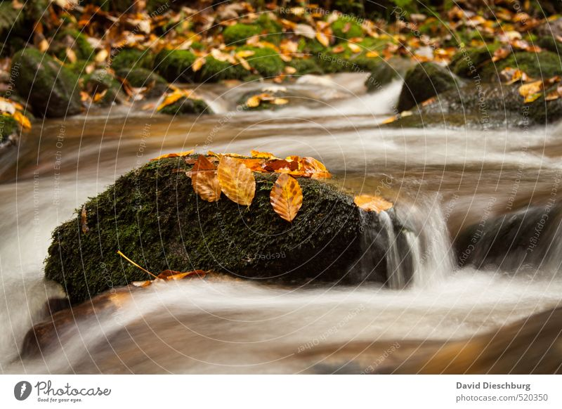 Smooth transition Nature Plant Animal Water Autumn Winter Beautiful weather Leaf Waves Coast River bank Waterfall Brown Yellow Orange Black White Autumn leaves