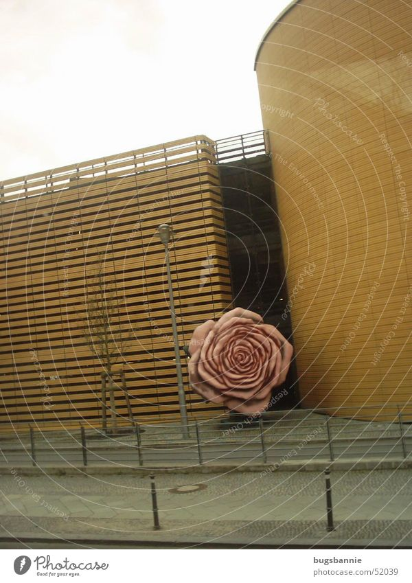 a lonely rose Rose Pink Wall (building) Statue Art Street Berlin