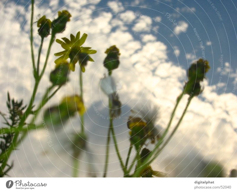 Sky Blue Flower Relaxation Meadow Lake Bird Swimming & Bathing Musical instrument Marguerite Drum Ant Bonn Double bass