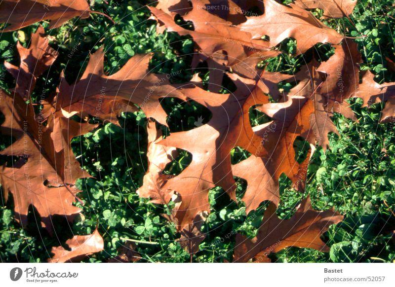autumn foliage Leaf Brown Meadow Autumn Exterior shot Plant