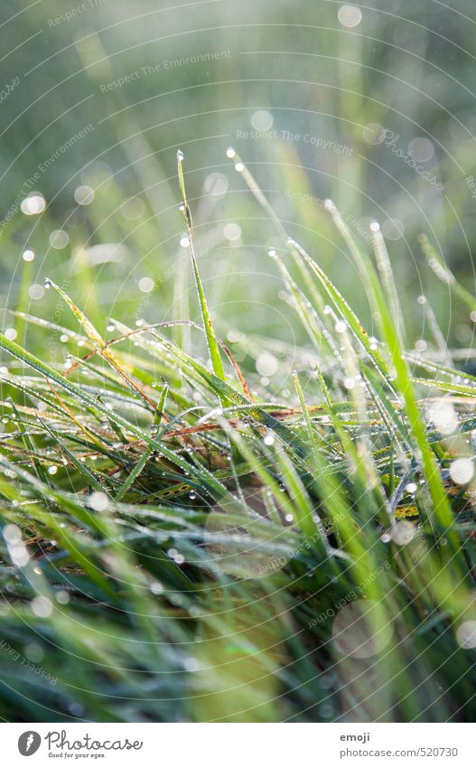 Nature Green Plant Landscape Environment Meadow Grass Natural Wet Drops of water Juicy
