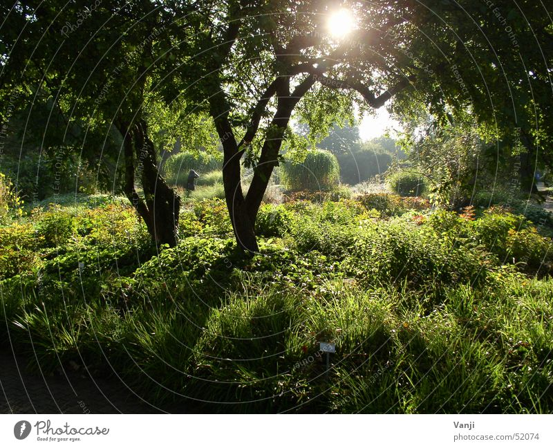 Nature Plant Green Beautiful Sun Tree Forest Spring Lighting Grass Garden Moody Bright Park Trip Mysterious