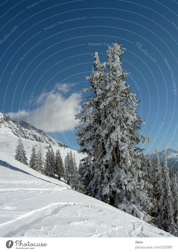 fresh snow Tree Snow Mountain Blue sky