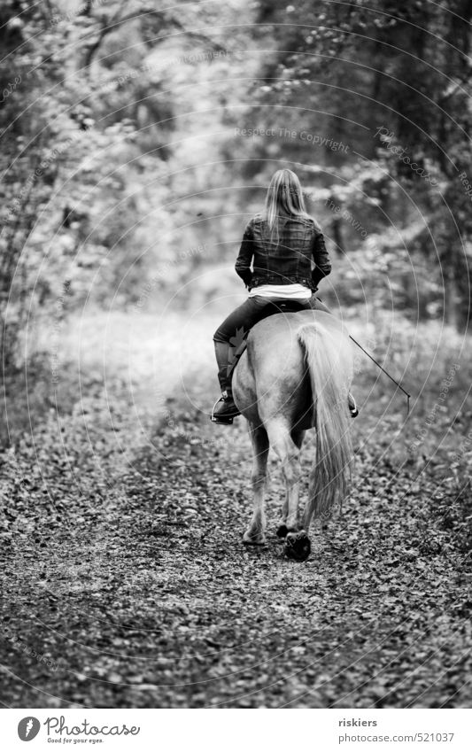 forays through the forest ii Ride Young woman Youth (Young adults) Woman Adults Life 1 Human being 18 - 30 years Autumn Beautiful weather Forest Pet Horse