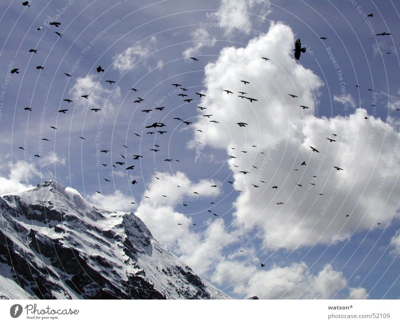 Sky Clouds Snow Mountain Bird Flying Rock