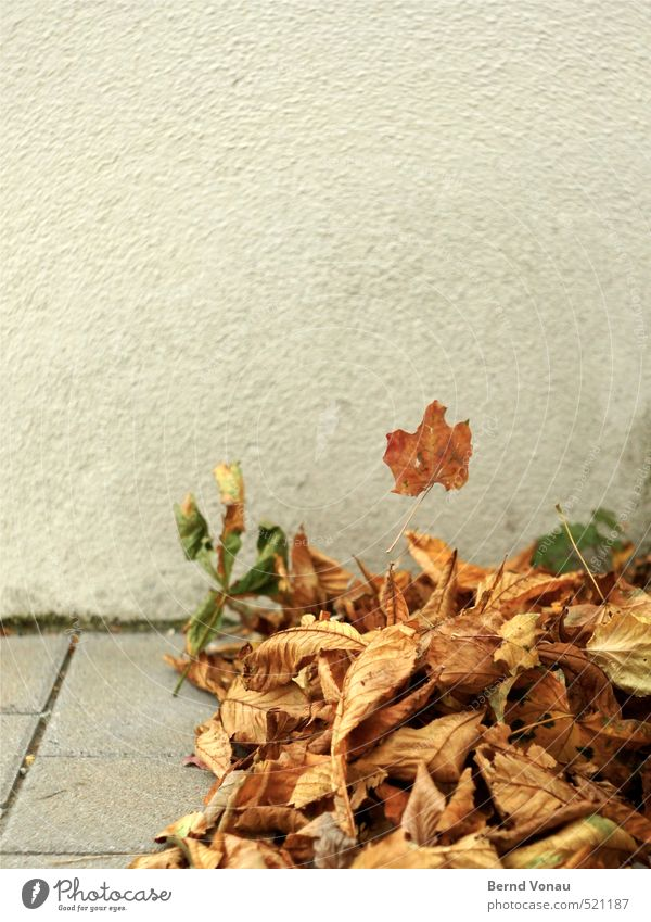 Nature Leaf Black Yellow Wall (building) Street Autumn Wall (barrier) Gray Above Brown Gold Wind Multiple Dry Departure