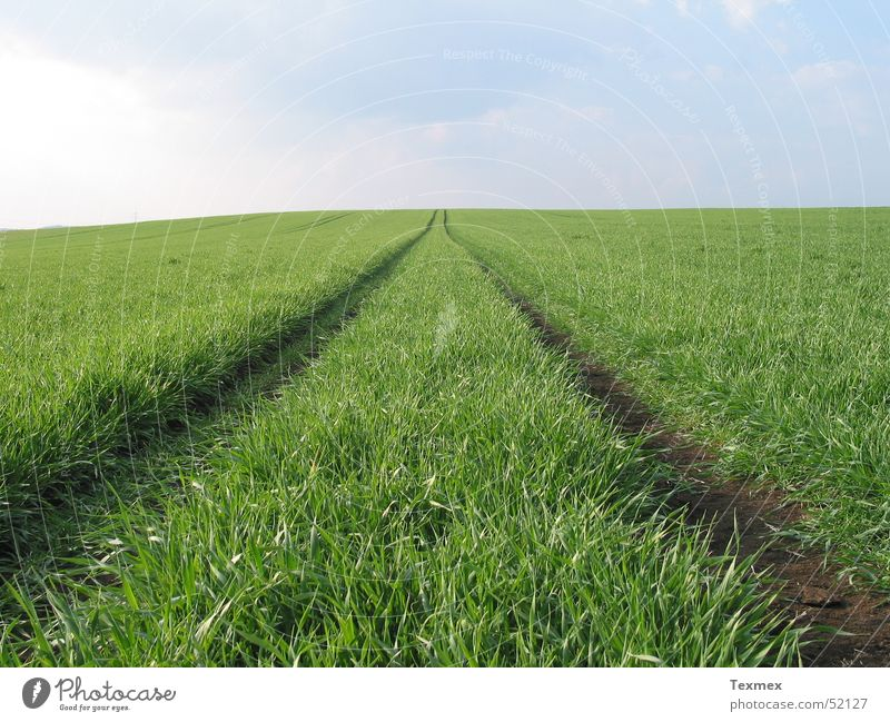 Way to heaven Spring Maturing time Meadow Fresh Grass Green Infinity Far-off places Ambitious Growth Lanes & trails Skyward