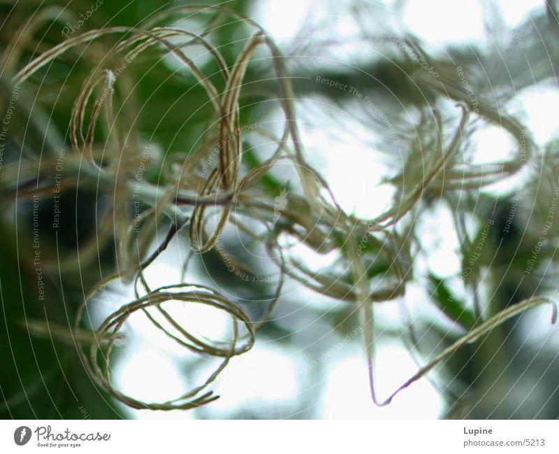 Nature Plant