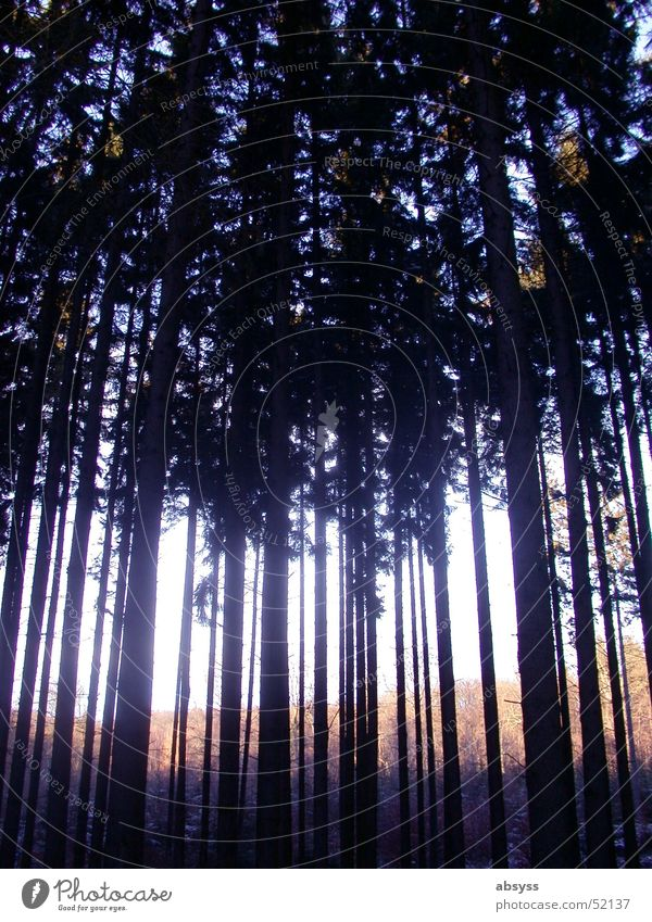 The forest for the trees ... Forest Tree Dark Lighting Radiation Nature Plant Shadow Light (Natural Phenomenon) Bright outside woods plan shine Exterior shot
