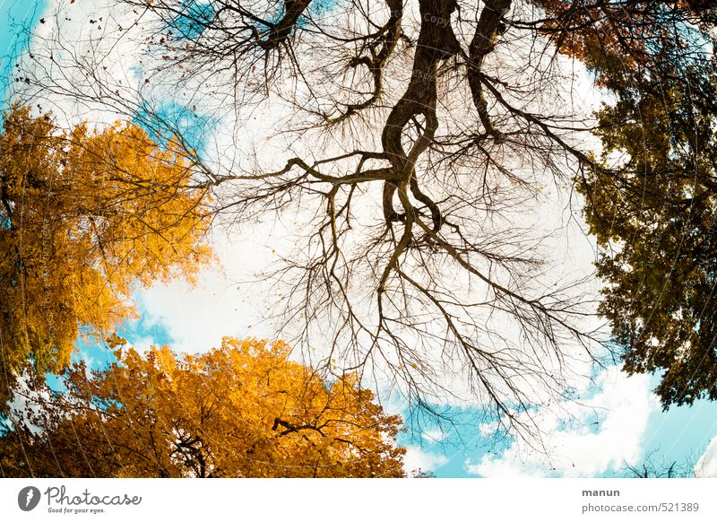 Sky Nature Tree Leaf Autumn Time Natural Perspective Beautiful weather Transience Change Eternity