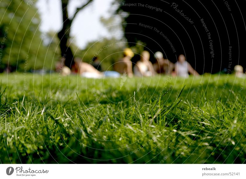 Human being Green Sun Summer Joy Vacation & Travel Relaxation Life Meadow Freedom Grass Group Warmth Park Friendship Together