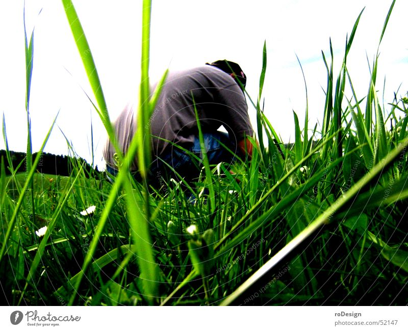 squats in the grass Crouch Meadow Grass Blade of grass Nature