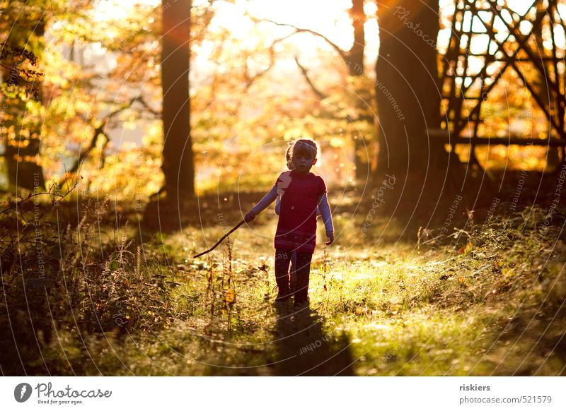 Human being Child Nature Landscape Girl Joy Forest Autumn Happy Natural Glittering Gold Infancy Illuminate Free Authentic