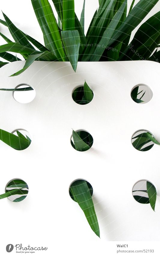 Punched 02 Armchair White Hollow Plant Leaf Palm tree Green Thread Wall (barrier) Wall (building) Backrest Blanket Point