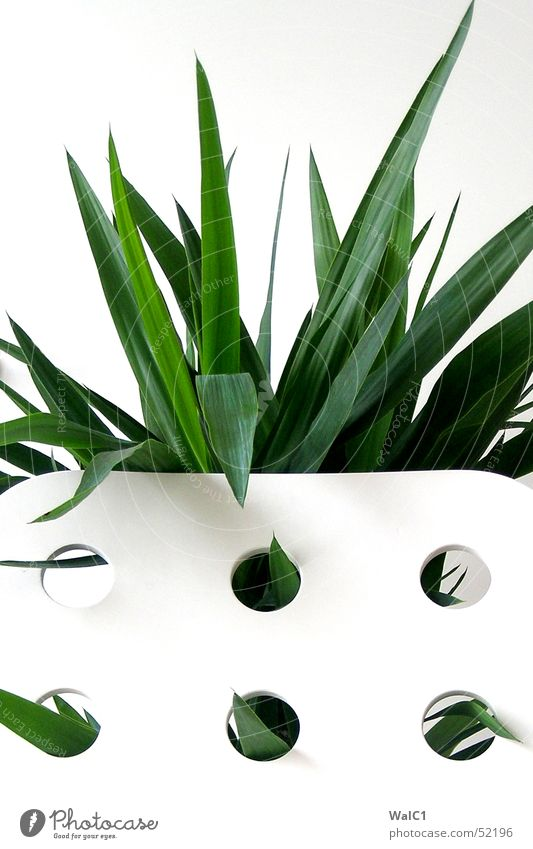 Punched 05 Armchair White Hollow Plant Leaf Palm tree Green Thread Wall (barrier) Wall (building) Backrest Blanket Point
