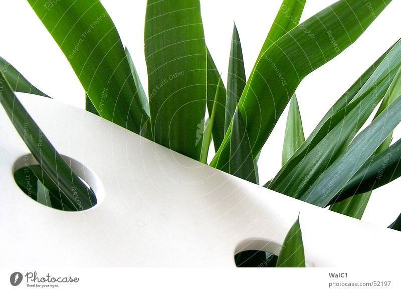 Punched 06 Armchair White Hollow Plant Leaf Palm tree Green Thread Wall (barrier) Wall (building) Backrest Blanket Point