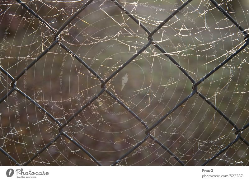 networks Garden Fence Sunlight Autumn Wire netting Metal Glittering Ease Network Spider's web Dew Illuminate Wire netting fence Interlaced Colour photo