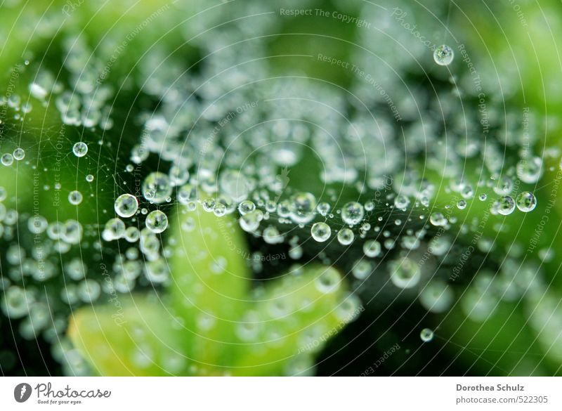 drizzle Nature Animal Drops of water Autumn Rain Plant Spider Water Line Knot Net Network Breathe Glittering Illuminate Esthetic Cold Wet Natural Green Silver