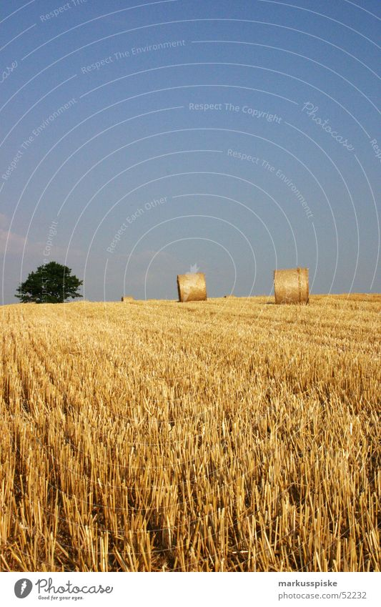 harvest Field Agriculture Straw Bale of straw Tree Yield Wheat Harvest Sun Sky Grain