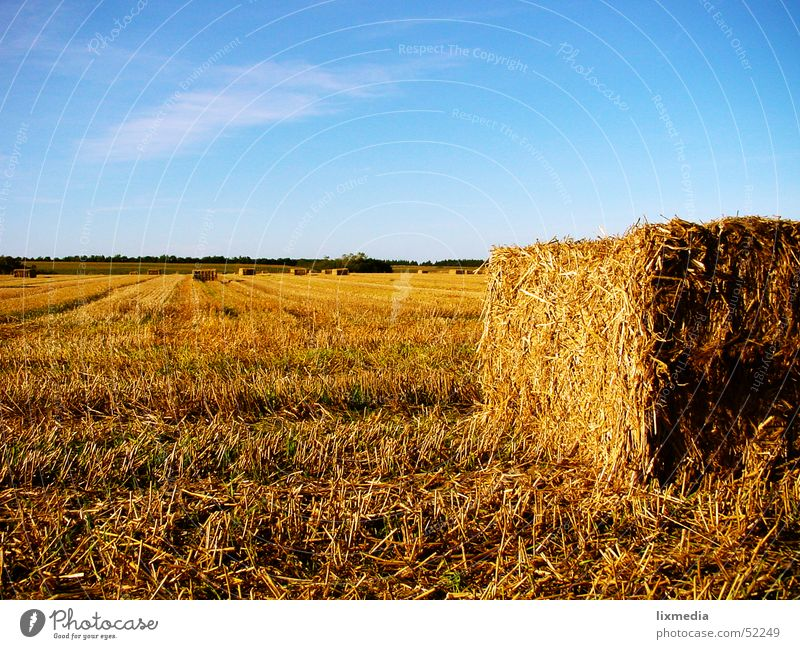 Yellow Field Gold Grain Hay Harvest Dusk Blue sky Denmark Straw Hay bale