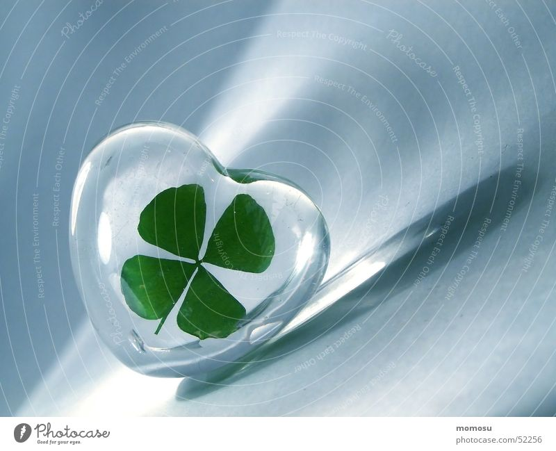 lucky clover Clover Cloverleaf Good luck charm Four-leaved Happy Heart Glass