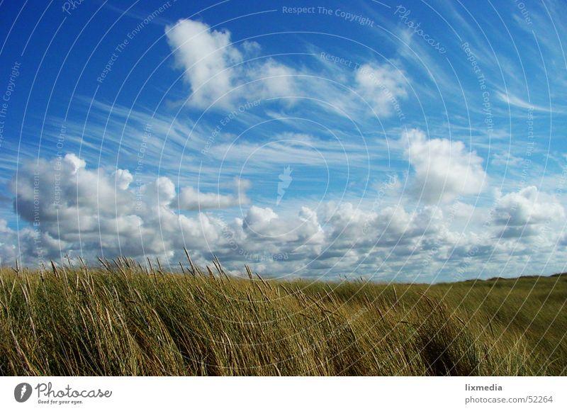 Typical Denmark Field Clouds Grass Grain Sky Blue Wind Beach dune