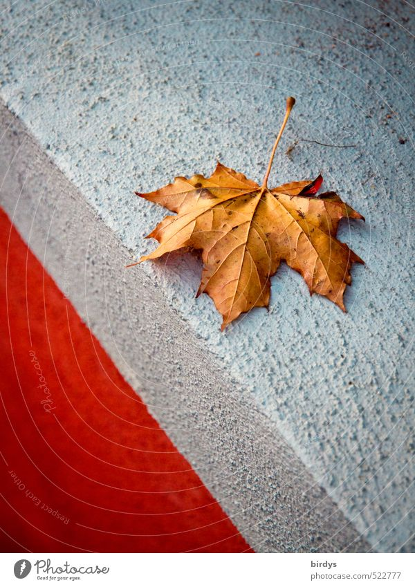 Nature Blue Beautiful Red Calm Leaf Wall (building) Autumn Wall (barrier) Brown Esthetic Change Autumn leaves Edge Maple leaf Original