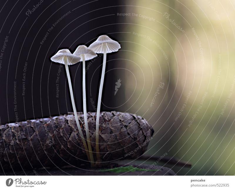 Nature White Plant Animal Forest Autumn Dream Idyll Design Esthetic Elements Uniqueness Joie de vivre (Vitality) Sign Attachment Mushroom