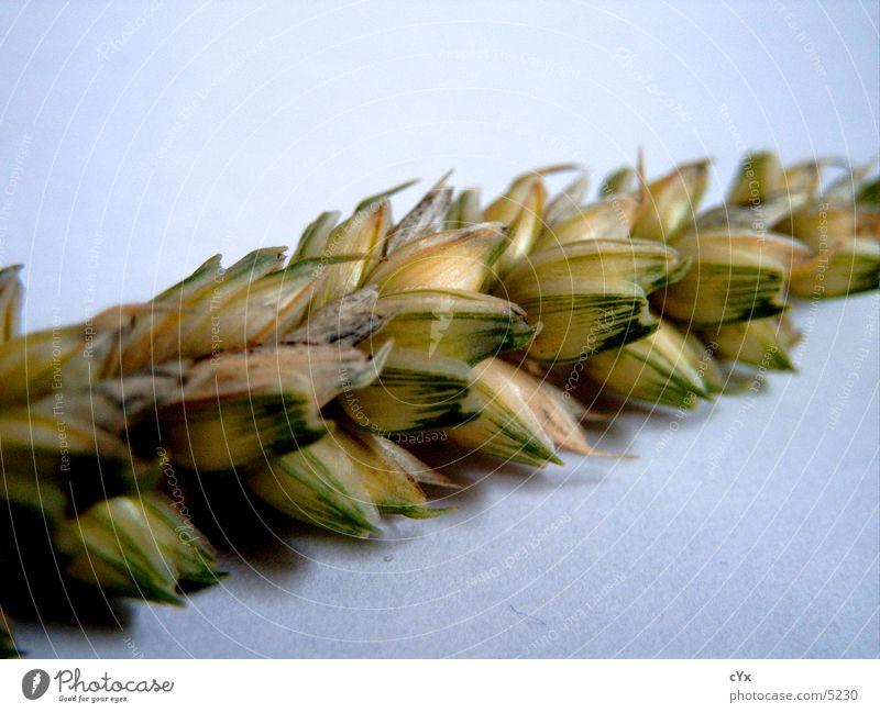 Grain Grain