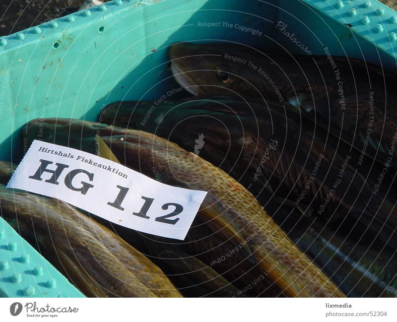 Fresh fish Fisherman Set of teeth Crate Ocean 112 hg Denmark Piece of paper shepherd's check fiske auction
