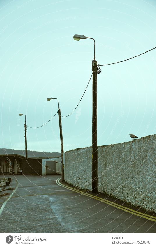 Empty Village Fishing village Small Town Wall (barrier) Wall (building) Street Lanes & trails Dark Cold Wet Loneliness Calm Street lighting Cable Seagull